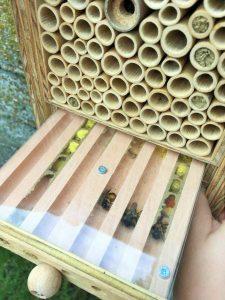 Projekt Bienen ylaa Bruderholz Kindertagesstätte
